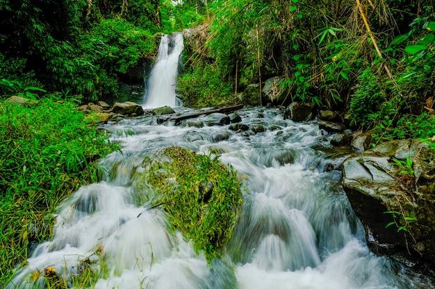 Cascadas en la naturaleza Foto Premium