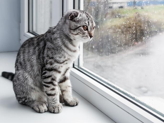 Cat se sienta en un alféizar Foto Premium