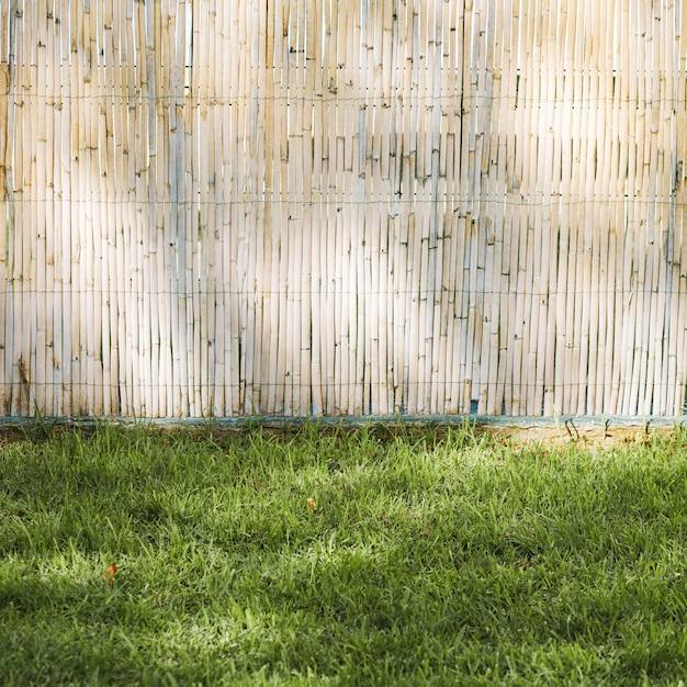 Cerca de bambú y hierba Foto Premium