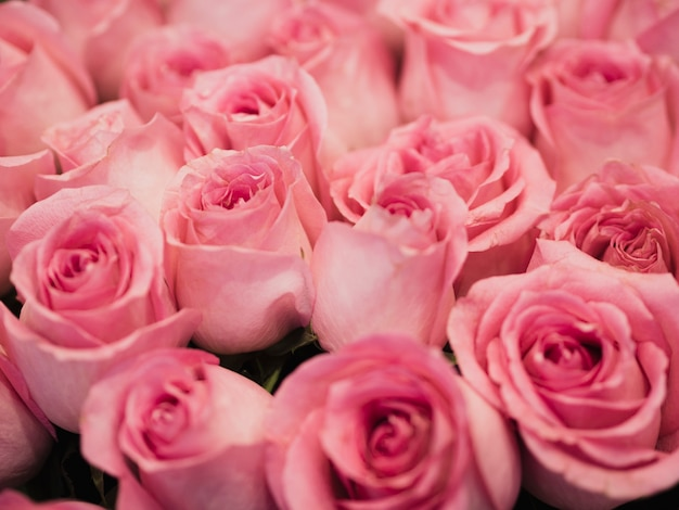 Cerca de hermosas rosas rosadas Foto gratis