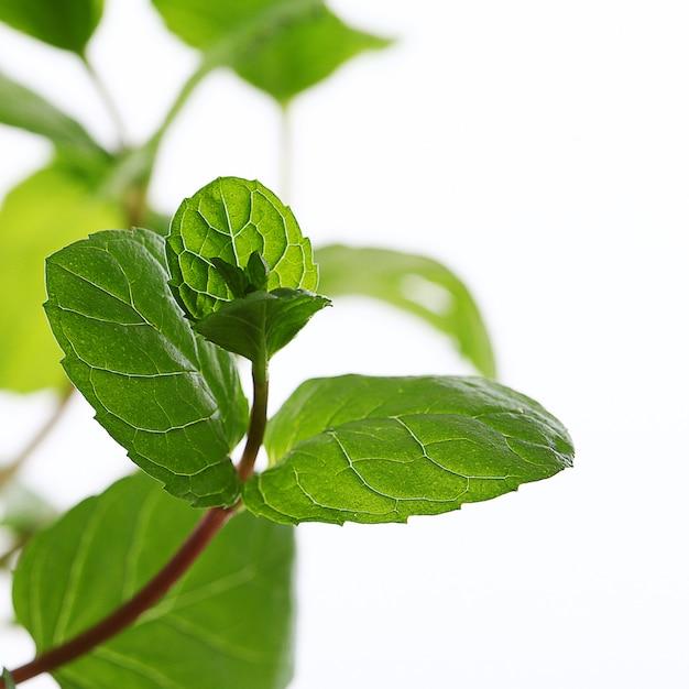 Cerca de hojas de menta Foto gratis