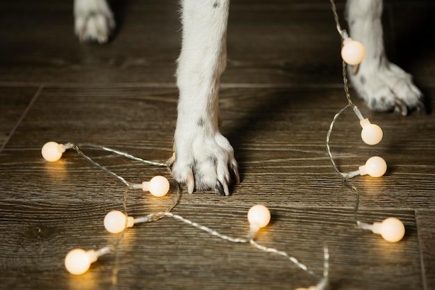 Cerca de patas de perro con luces de navidad Foto gratis
