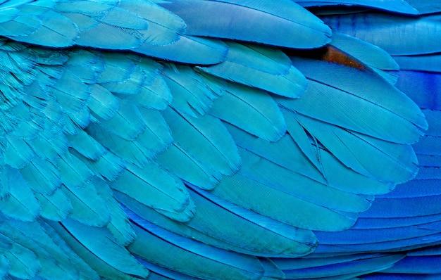 Cerca de plumas de pájaros guacamayo azul Foto Premium