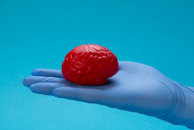 Cerebro rojo en la palma en guante de látex azul del doctor Foto Premium