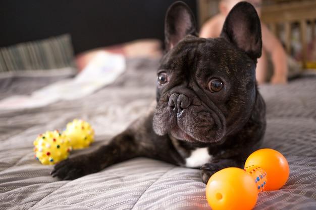 Jugando Con Juguetes Cerrar Bulldog Francés En Cama La Brindle Sus xeQWEdCBor
