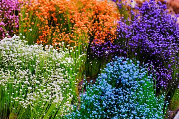 Cerrar Fondo De Flor Pequena Hierba Colorida Pequenas Flores