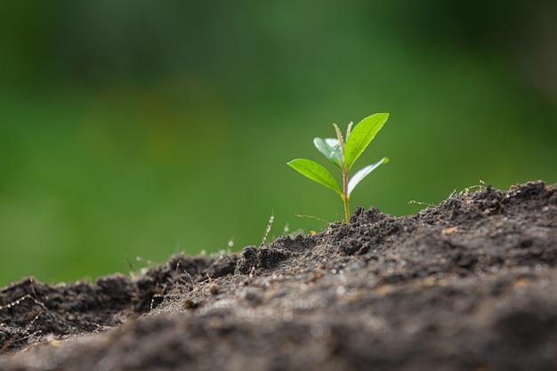 Cerrar imagen del árbol joven de la planta está creciendo Foto gratis