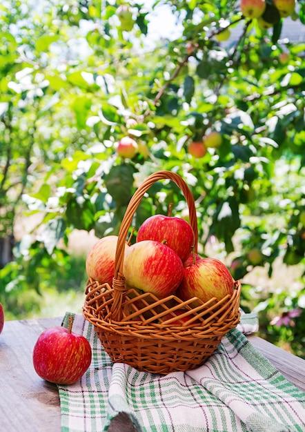 Cesta de manzanas rojas maduras sobre una mesa en un jardín de verano Foto gratis
