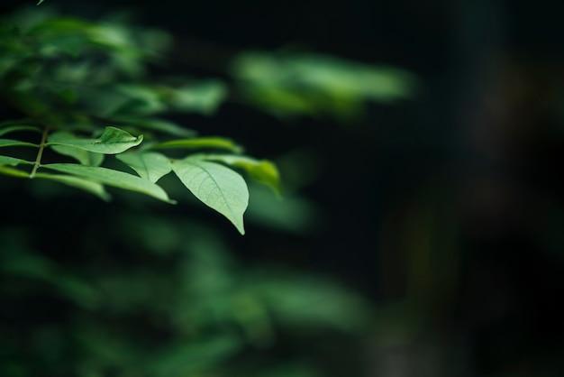 Ciérrese para arriba de hojas verdes en fondo borroso de la hoja. Foto gratis