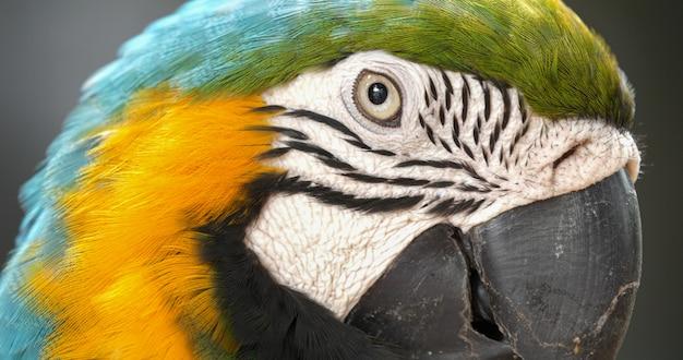Ciérrese para arriba de loro colorido del macaw del escarlata. Foto Premium