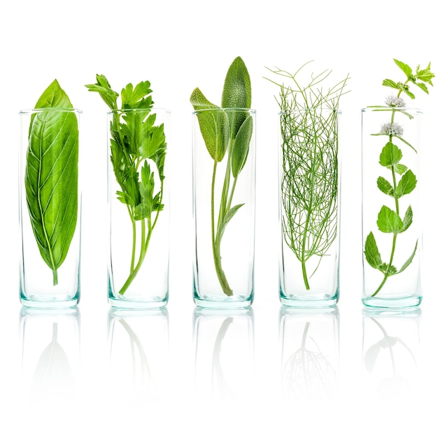 Ciérrese encima de las botellas de hierbas aromáticas frescas aisladas en el fondo blanco. Foto Premium