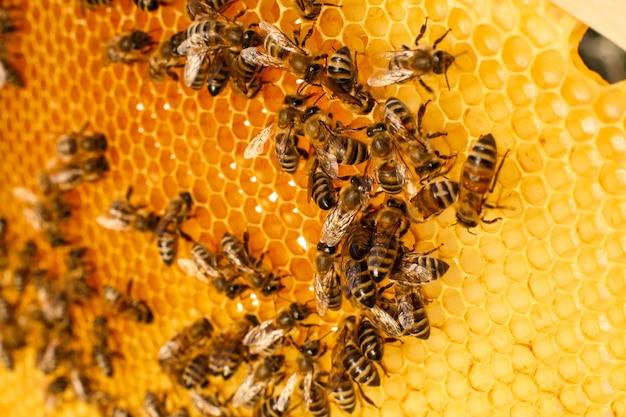 Ciérrese encima del panal en colmena de madera con las abejas en él. concepto de apicultura. Foto Premium