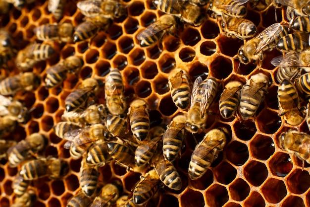 Ciérrese encima del panal en colmena de madera con las abejas en él Foto Premium