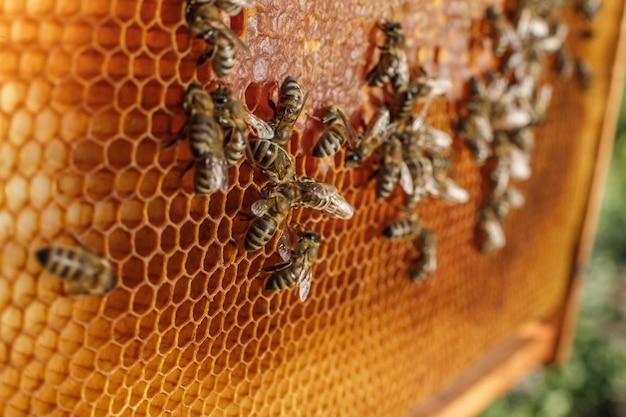 Ciérrese encima del panal en marco de madera con las abejas en él. Foto Premium