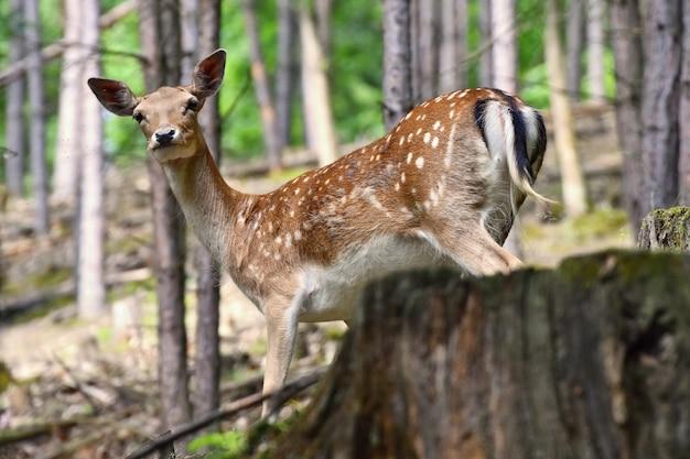 Salvaje en el bosque