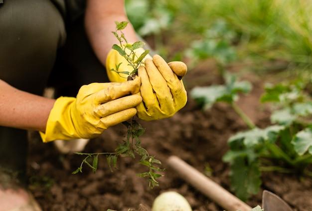 Close-up mujer cosecha en jardín Foto gratis