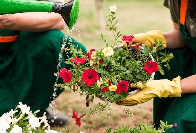 Close-up pareja regando las flores Foto gratis