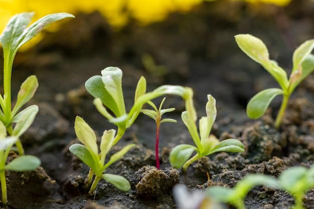 Close-up pequeñas plantas orgánicas Foto gratis