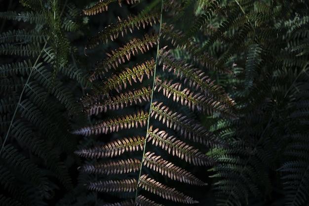 Closeup foto de un helecho hojas Foto gratis