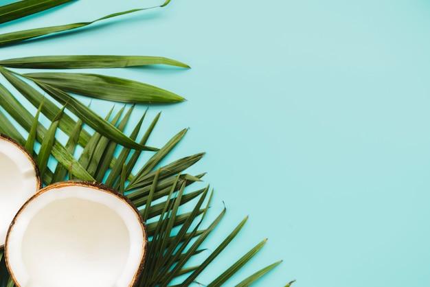 Cocos rotos y hojas en esquina. Foto gratis