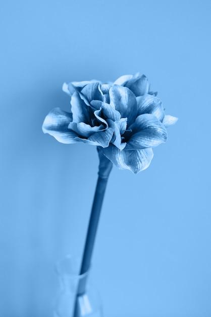 Color azul clásico del año 2020. flor en el fondo Foto Premium