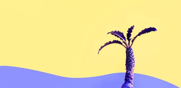 Color exótico de cactus dorstenia sobre fondo de colores. Foto Premium