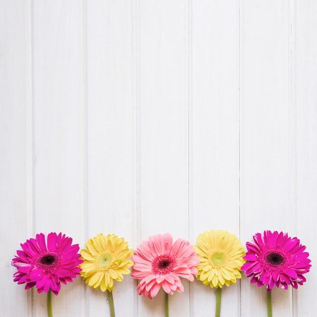 Flores Gerbera Fotos Y Vectores Gratis