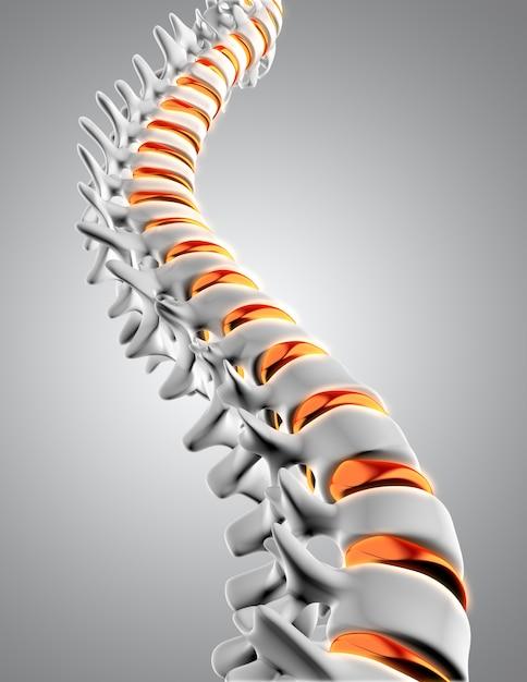 Columna vertebral 3d Foto gratis