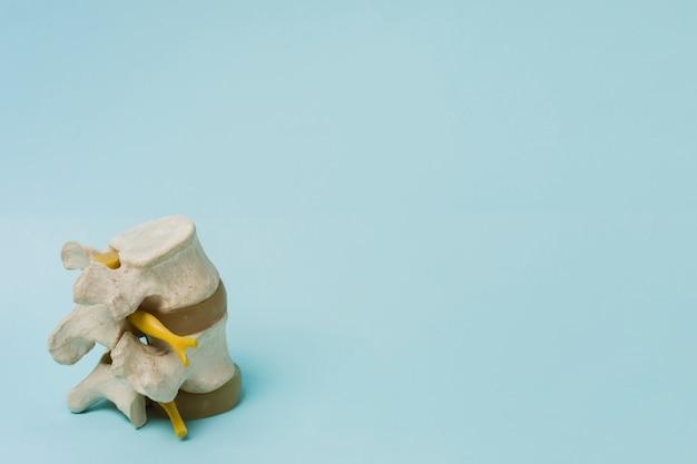 Columna vertebral Foto gratis