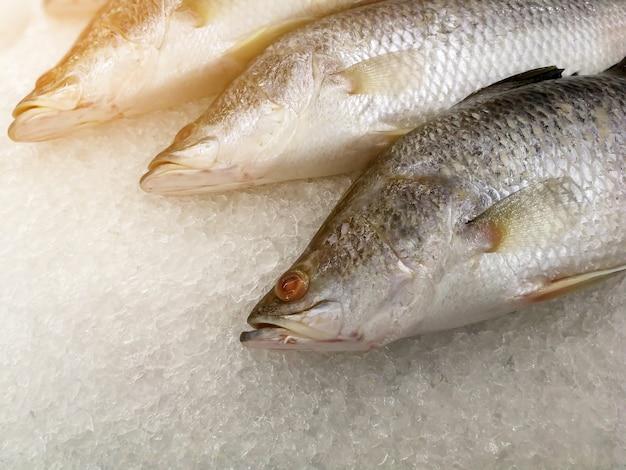 Coma pescado fresco en hielo en la caseta de mariscos en un mercado en venta para cocinar Foto Premium