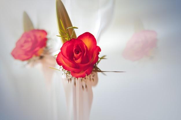 Completamente florecida, hermosa rosa roja con tallo y hojas en blanco, con reflejo Foto Premium