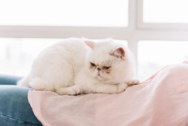 Composición adorable de mascota con gato blanco dormido Foto gratis