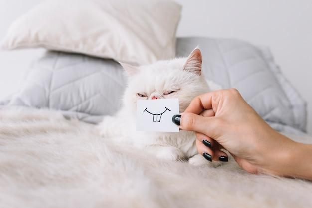 Composición adorable de mascota con gato blanco dormido