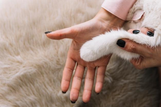 Composición adorable de mascota con gato blanco Foto gratis