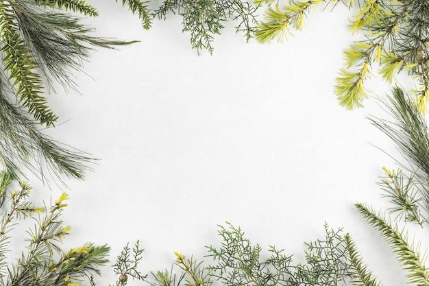 Composición de diferentes ramas. Foto gratis