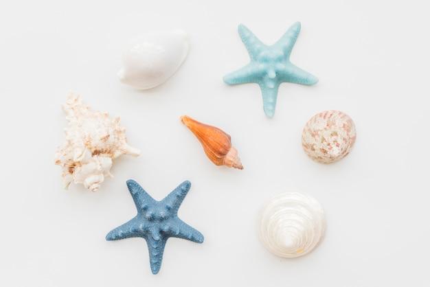 Composición de estrellas de mar y conchas marinas. Foto gratis