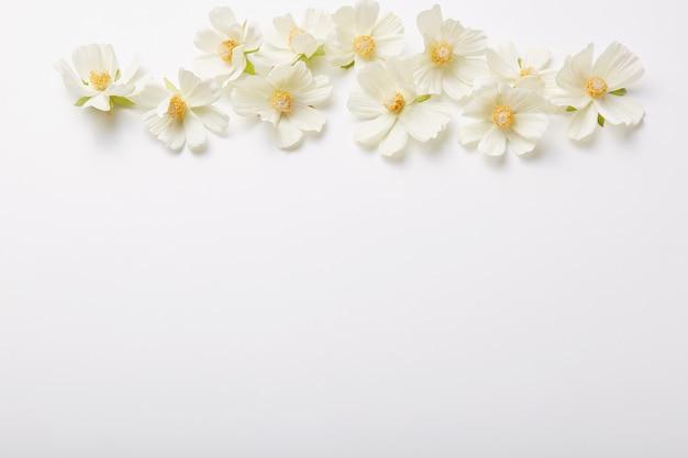 Composición floral hermosas flores arriba aisladas sobre pared blanca patrón de primavera. tiro horizontal Foto gratis