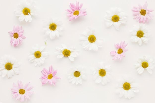 Composición de muchos brotes de flor de la margarita Foto gratis