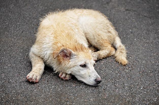 El concepto de animales sin hogar. Foto Premium