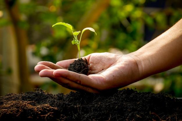 Concepto de crecimiento, las manos están plantando las plántulas en el suelo. Foto Premium