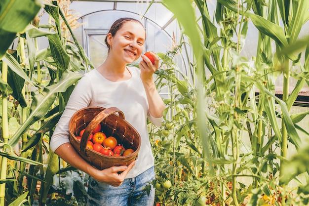 Concepto de jardinería y agricultura. joven trabajador agrícola con cesta recogiendo tomates orgánicos maduros frescos. productos de invernadero. producción de alimentos vegetales. Foto Premium