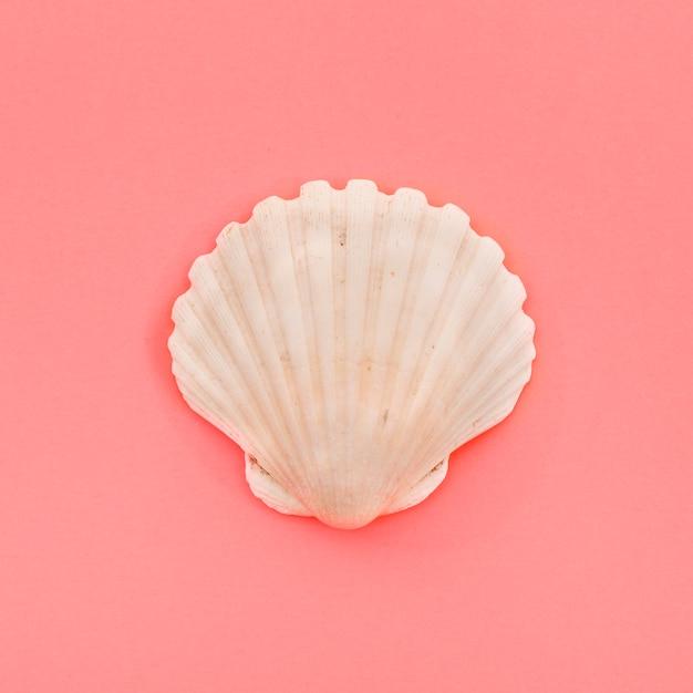 Concha de concha blanca cerrada sobre fondo coral Foto gratis