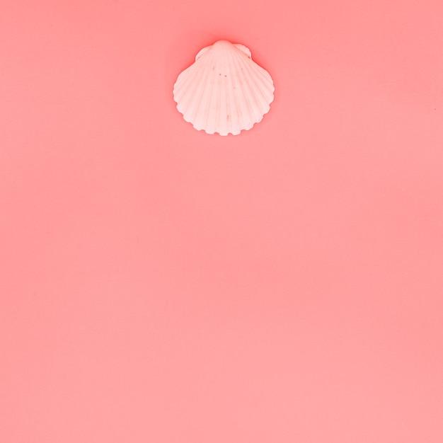 Concha de concha de peregrino rosada en el fondo coralino con el espacio de la copia para escribir el texto Foto gratis