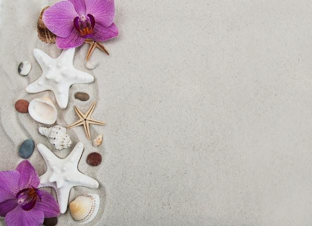 Conchas y estrellas de mar. Foto Premium