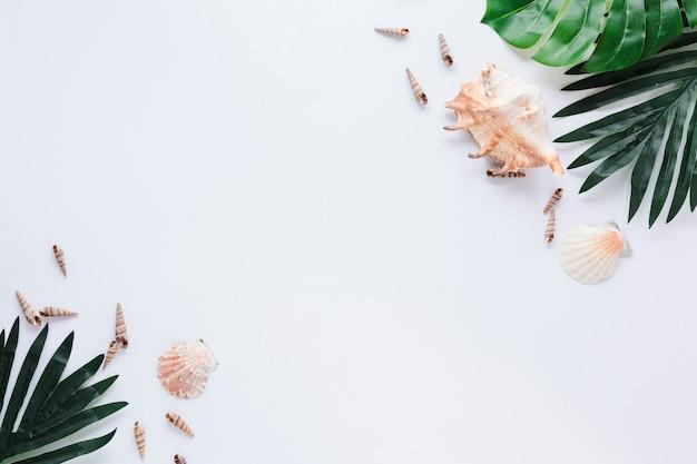 Conchas de mar con hojas verdes en mesa Foto gratis