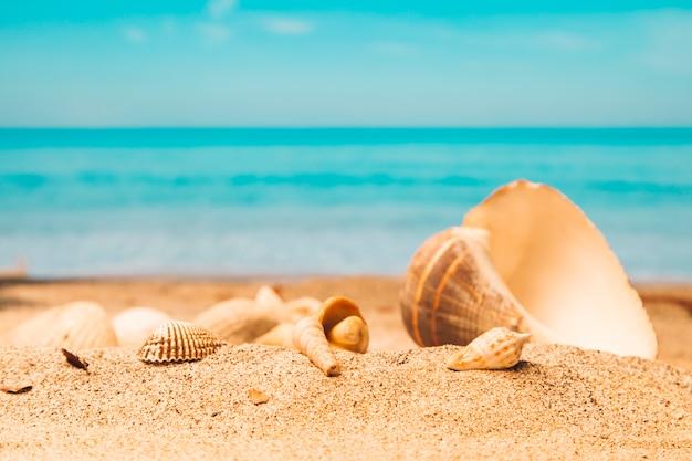 Conchas en la playa de arena Foto gratis