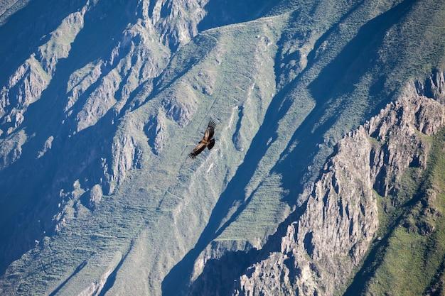 Cóndor volando en las montañas en perú Foto Premium