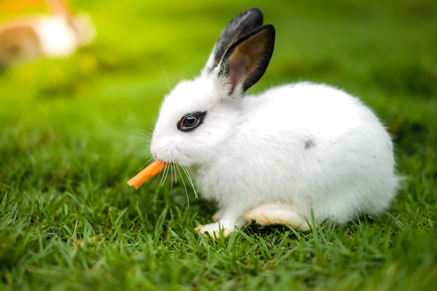 Un Conejo Comiendo Zanahoria En La Hierba Verde Foto Premium Y la gran zanahoria vendrá, ¡aleluya, aleluya al pulento! https www freepik es profile preagreement getstarted 2374145
