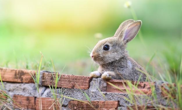 Conejo lindo que se sienta en el conejito de pascua del prado de la pared de ladrillo Foto Premium