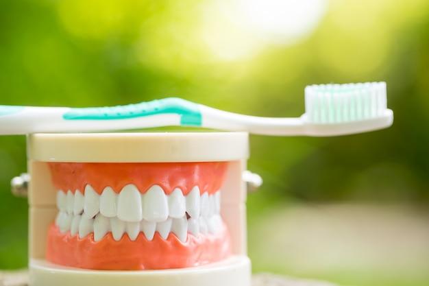 Conjunto de herramientas de equipos médicos dentistas en el parque Foto Premium